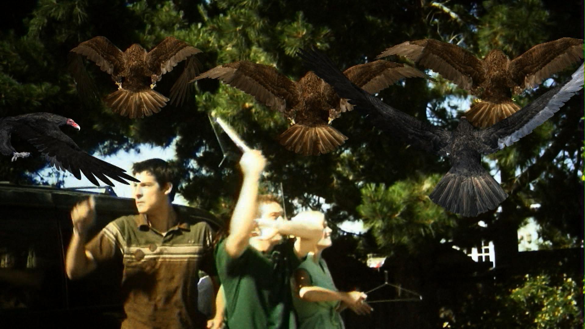 Risultati immagini per birdemic